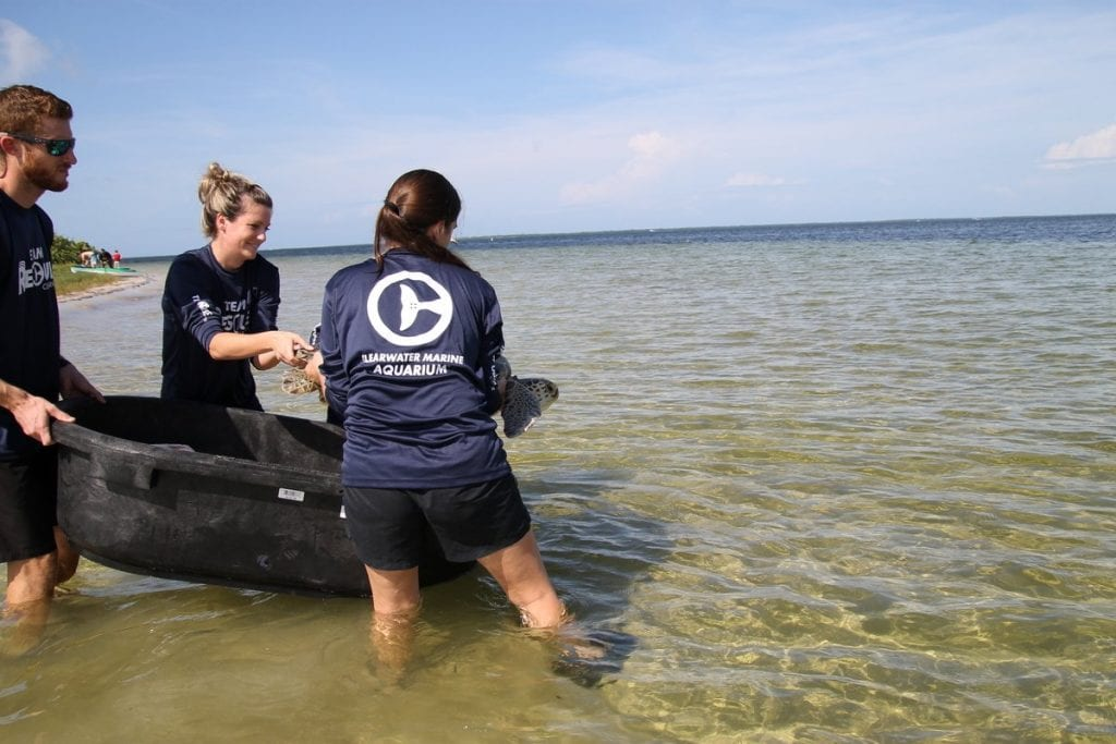 Sea turtle team releasing Xavier