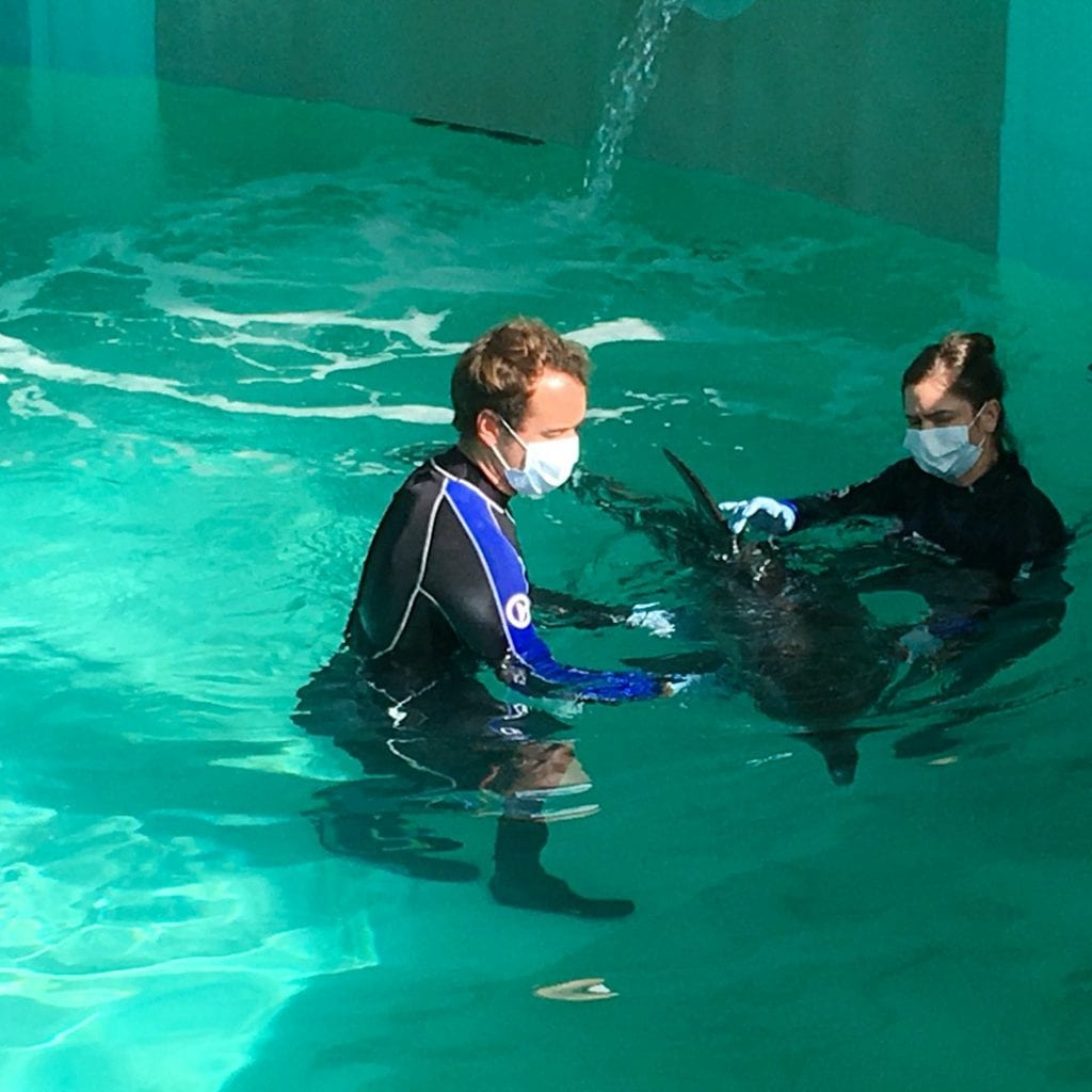 rescue team with rescued rough-toothed dolphin in rehab