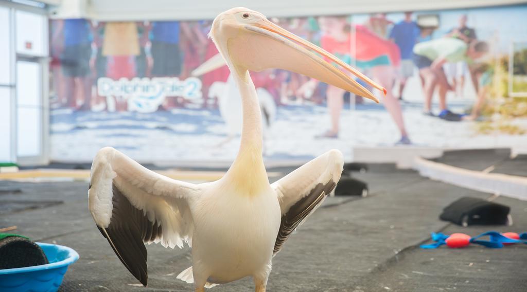 Matthew, pelican learning behavior