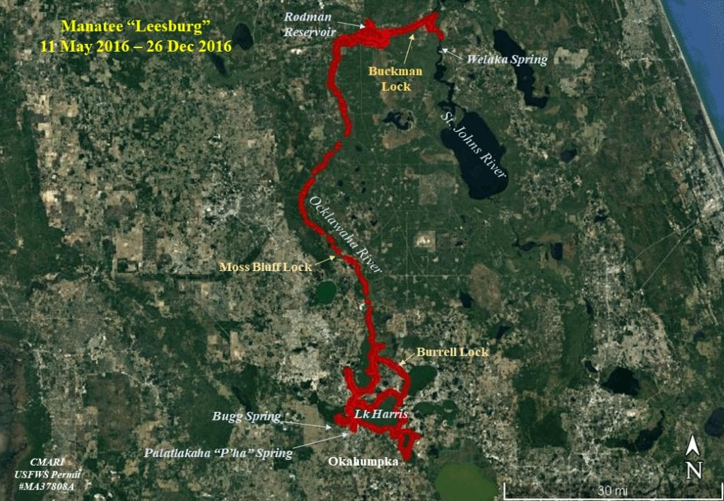 Map of Leesburg manatee tracking in the Ocklawaha River system.
