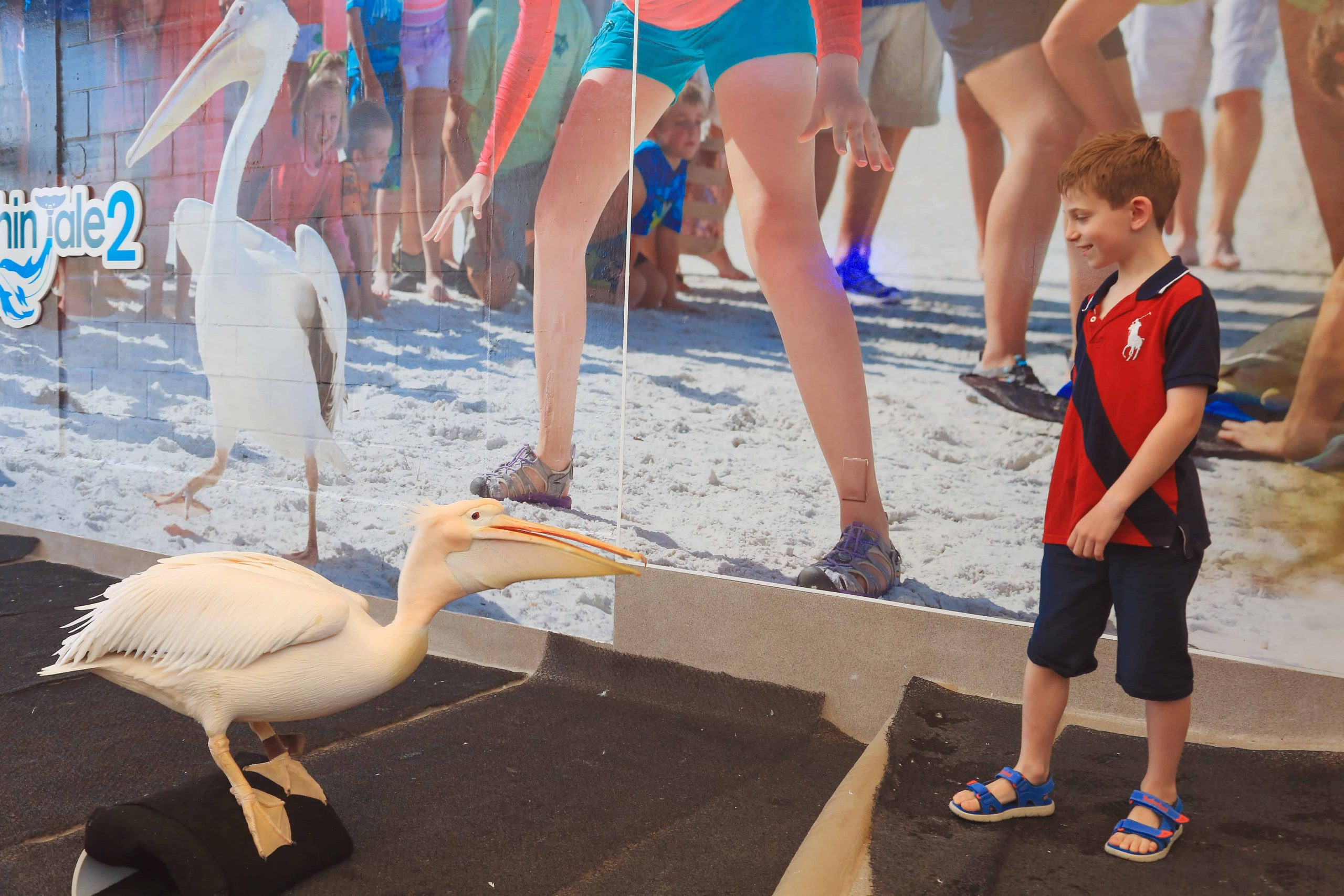 Young Boy Feeding a Pelican