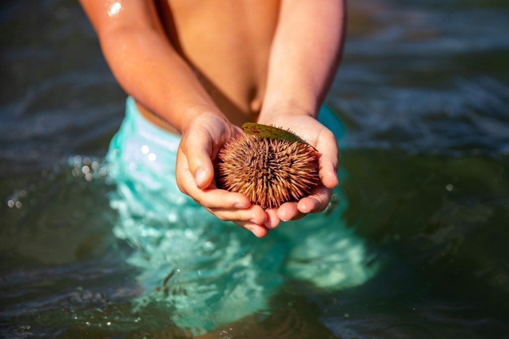 Child Holding a Sea Urchin in the Water