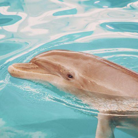 PJ the Dolphin
