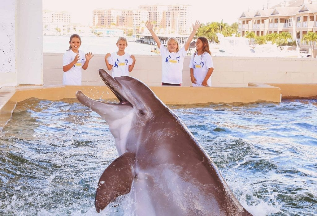 Group of Campers laughing with a Dolphin