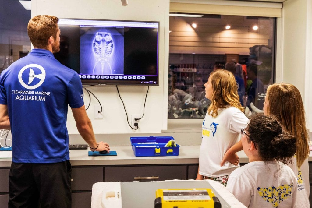 Group of Campers Examining an X-ray in the Surgical Suite