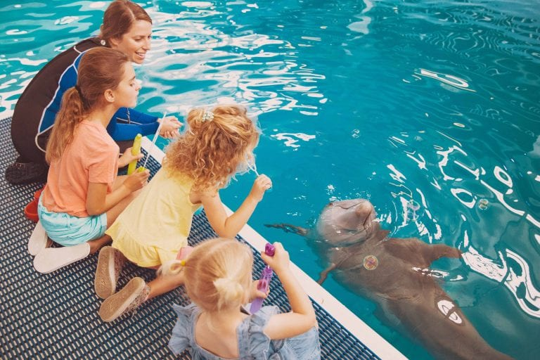 Dolphin Animal Care Assistant Showing Kids the Dolphin