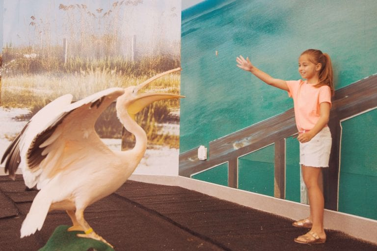 Young Girl Feeding a Pelican