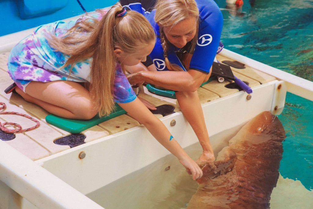Young Girl Touching a Nurse Shark with CMA Staff
