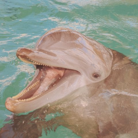 Nicholas the Dolphin Smiling