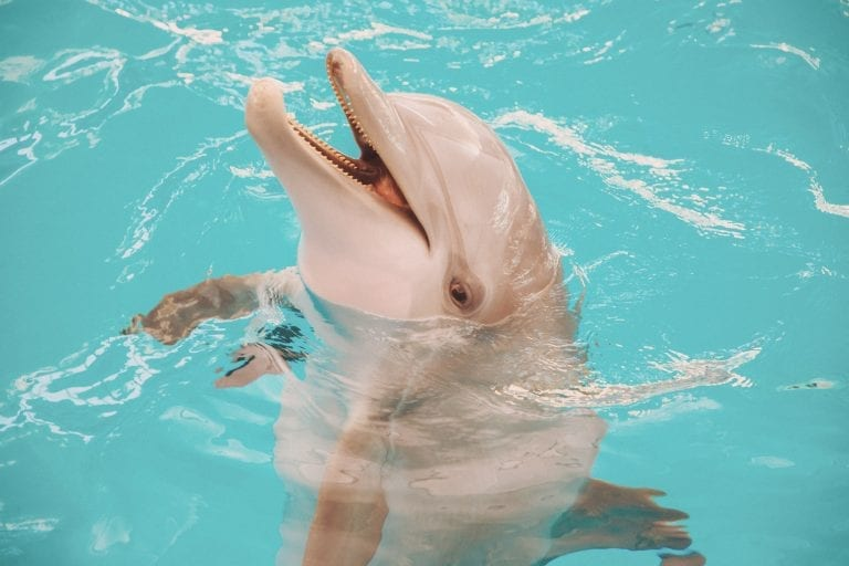 PJ the Dolphin Smiling