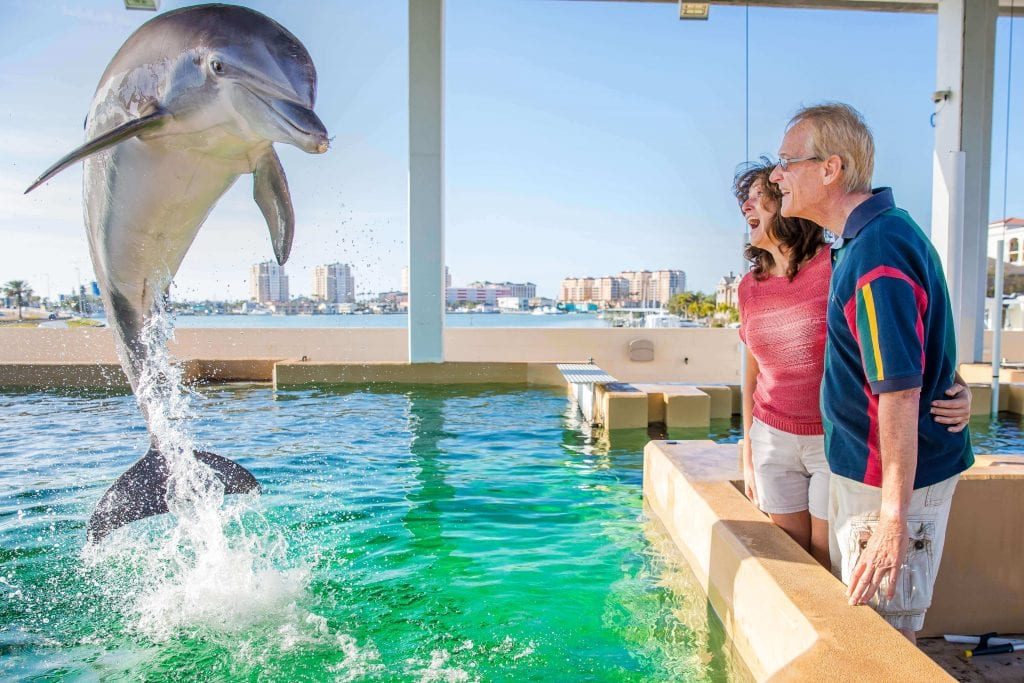 Retired Couple Engaging with Jumping Dolphin