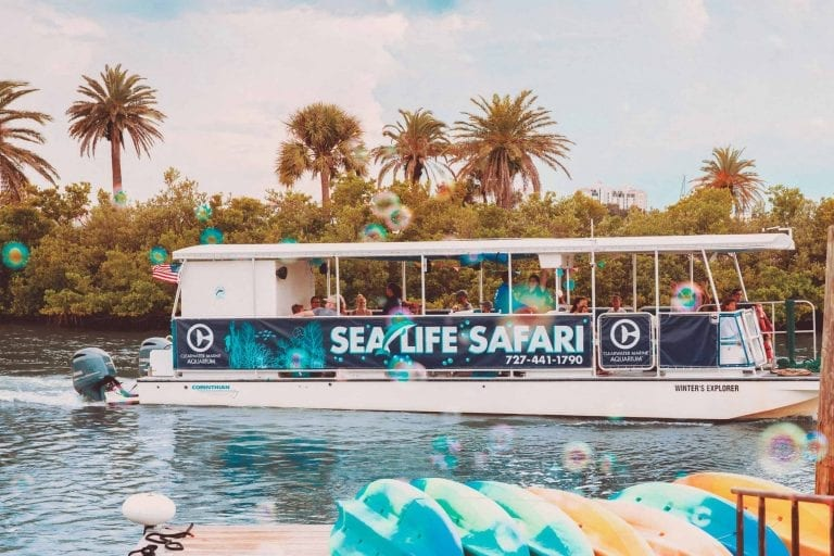 Sea Life Safari Boat Tour