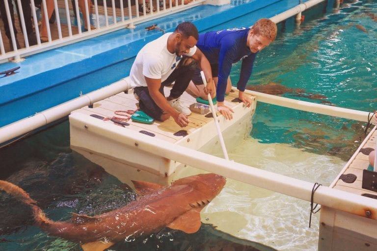 Man with CMA Staff Learning About the Shark Care Experience