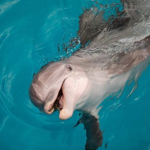 Winter the Dolphin