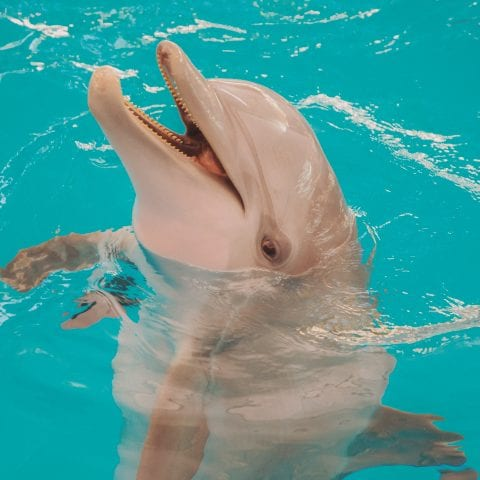 Winter the Dolphin Smiling