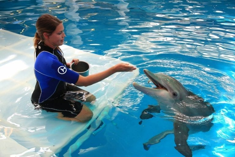 Dolphin being fed