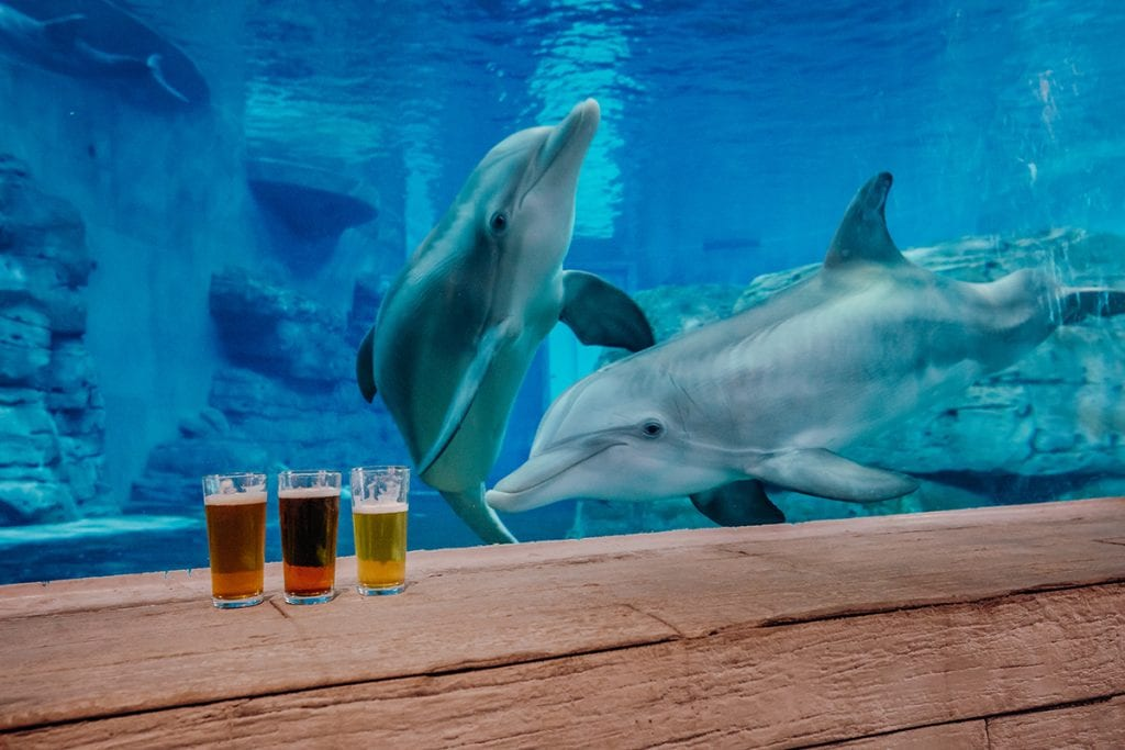 Drinks in front of Dolphins