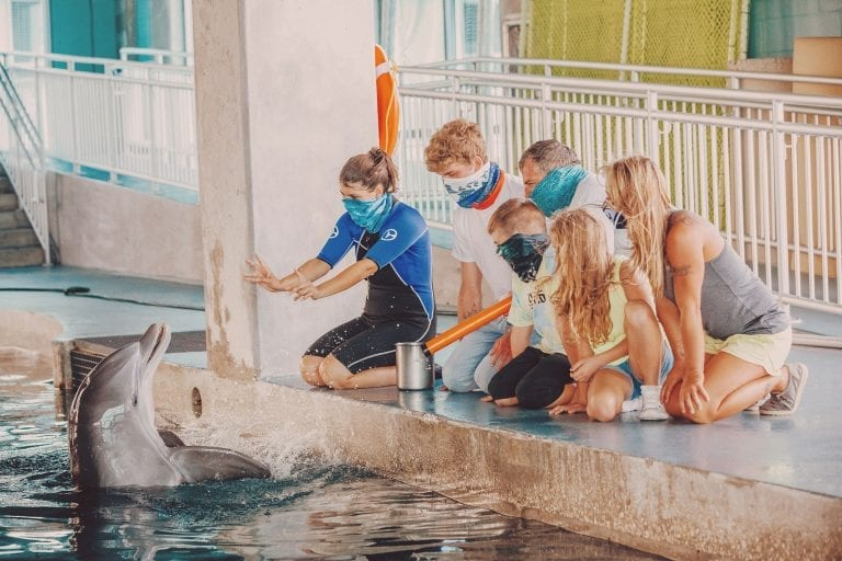 bottlenose dolphin experience
