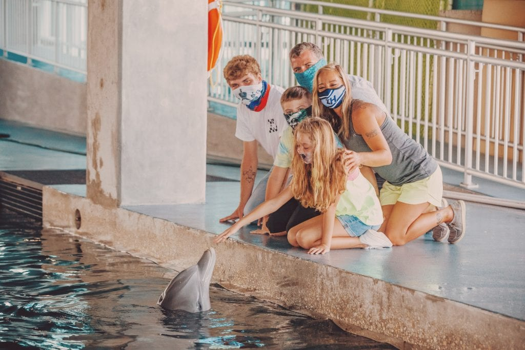 hope dolphin interaction