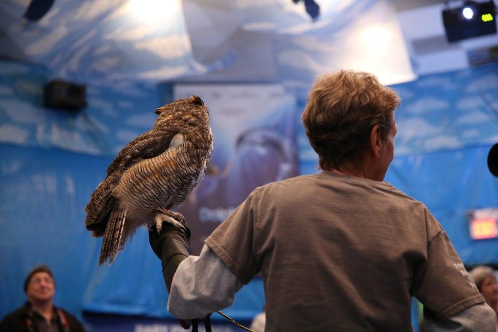 holding hawk
