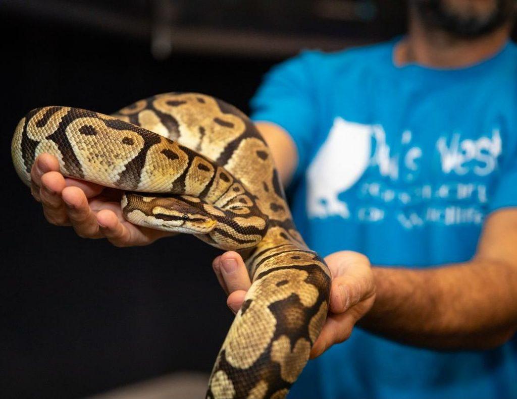 holding snake