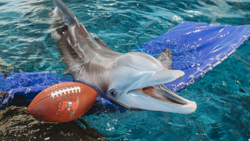 Winter the dolphin with bucs football