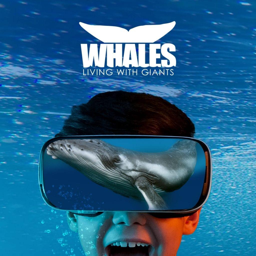 Whales exhibit