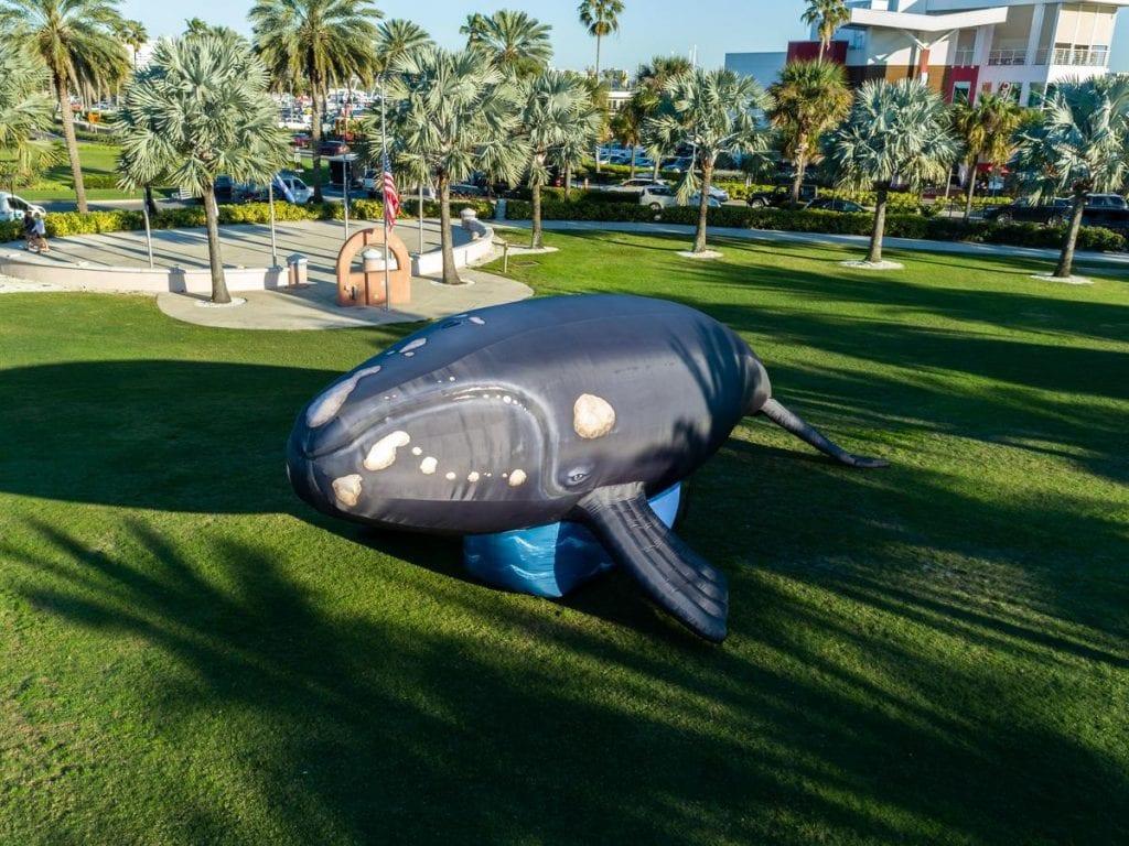 ava whale