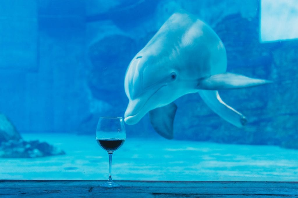 Wine and Winter the Dolphin