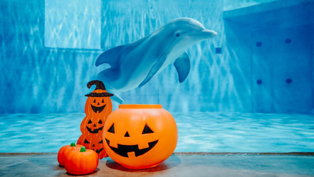 Dolphin with halloween enrichment